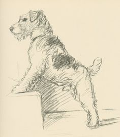 Wire Fox Terrier by Lucy Dawson also known as MAC.  Great terrier/dog artist from 1st half of 20th century.  Two great books Dogs as I See Them and Rough and Smooth.