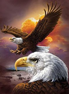 [Visit to Buy] Diy Diamond Painting Animals Birds Eagles Cross Stitch Square Rhinestone Pictures Of Crystals Diamond Embroidery full gear Beautiful Birds, Animals Beautiful, Photo Aigle, The Eagles, Bald Eagles, Eagles Live, Benfica Wallpaper, Aigle Animal, Eagle Drawing