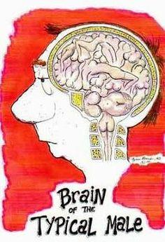 Male Brain...