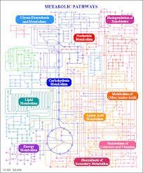 Resultado de imagen de mapa rutas metabolicas