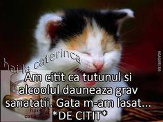 Cats, Memes, Animals, Gatos, Animales, Animaux, Meme, Animal, Cat