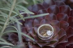 Ring pic with succulents, I love that Derek chose them! Cathedral Length Veil, Mr Mrs, Fisher, Our Wedding, Succulents, Wedding Photography, Ring, Rings, Succulent Plants