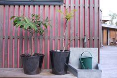 Maison M - Nantes  Bardage bois naturel Red Cedar et pare pluie coloré