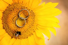 Křakov u Horškovského Týna se o víkendu stal rájem slunečnic. Líbila by se Vám také taková svatba?