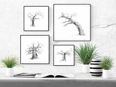Black and white wall art prints of baobab trees for your living room or bedroom. Visit my Etsy store to shop my range of prints and print sets inspired by African nature.  #baobabtreedecor #africandecorideas #africandecorlivingroomwallart #africandecorbedroom #interiordesignideas   #walldecorideas #walldecorlivingroom #walldecorbedroom #fineartprints #finearthomedecor #printablefineart  #monochromebedroom #monochromelivingroom #minimalisthome #blackandwhitebedroomideas… Black And White Living Room, Black And White Wall Art, White Ink, Tree Wall Art, Wall Art Decor, Wall Art Prints, Fine Art Prints, Giraffe Drawing, Baobab Tree