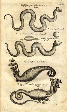 Historiæ Naturalis De Serpentibus (libri II) ist ein Teil der von Jan Jonston verfassten Naturgeschichte der Tiere (1650-1653), die ein ganzes Jahrhundert lang das am meisten verbreitete Handbuch der Tierkunde war. Erfolgreich wurde diese Enzyklopädie vor allem durch die vielen Bilder, die von Matthäus Merian dem Älteren (1593 -1650), seiner Werkstatt und seinen Nachfolgern nach Vorlagen früherer Tierbilder, nur selten aber nach Modellen (echten Tieren), gemalt wurden. Es erschien 1653 in…