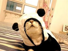 Blind Panda   The 57 Greatest Pet Costumes EVER