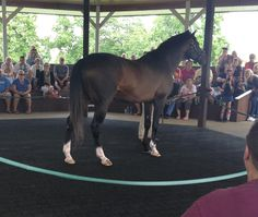 This is Cigar at the Kentucky Horse Park. He is the first American thoroughbred racehorse to win 16 races in a row against top of the class racehorses, 1995 and 96. Before him it was triple crown winner Citation, in 1948 and 50.