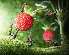 ant-tales-macrophotographie-4