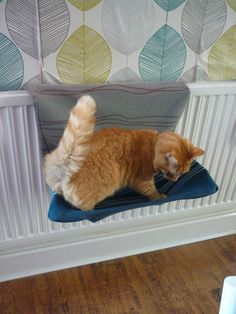 Ridiculously Easy Steps for Making a Comfy Cat Bed Diy Cat Bed, Cat House Diy, Diy Bed, Street Cat Bob, Cat Window Perch, Cat Anatomy, Mama Cat, Cat Room, Cat Sleeping