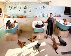 Dog and large animal custom enclosures masonco pinterest large repinned dog wash solutioingenieria Image collections