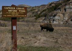 North Unit - Theodore Roosevelt National Park - Reviews of North Unit - TripAdvisor