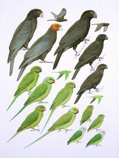 Mad.-parrots.jpg (850×1134)