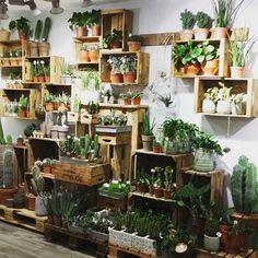 A succulent display - Bekijk deze Instagram-foto van @trinedyrgaard • 13 vind-ik-leuks