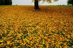 """The ground looked extremely colorful with these fallen leaves."" Bijoy Mishra in Seattle."