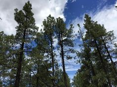 6714 N Sanderson Pass Rd, Parks, AZ 86018. 0 bed, 0 bath, $105,000. Peace in the Pines!!...