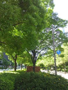 Summer's green at KOBE Sannomiya east amusement park  神戸三宮東遊園地 夏の緑