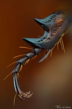 Yousef Al Habshi Arabian Chafer Beetle's Leg A close up shot of the Arabian Chafer Beetle Cool Insects, Bugs And Insects, Beautiful Bugs, Amazing Nature, Macro Fotografie, Foto Macro, Micro Photography, Photography Magazine, Photography Business