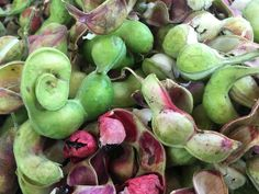 Guamúchil, a Mexican fruit
