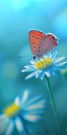 Butterfly in a daisy - nature and wildlife photo - blue hour light Butterfly Kisses, Butterfly Flowers, Beautiful Butterflies, Beautiful Flowers, Beautiful Pictures, Orange Butterfly, Simply Beautiful, Image Nature, Mundo Animal