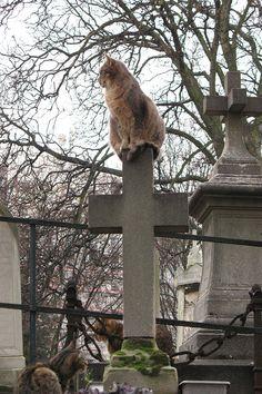 Cat on a cross, in Paris.