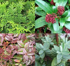Bloembakken opvullen met winterharde planten - winterbloembakken beplanten voor vensterbank