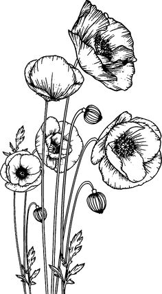 Black And White Flowers, Black Leaves, Black And White Drawing, Black White, Bird Illustration, Botanical Illustration, Animal Spirit Guides, Poppies Tattoo, Line Art Tattoos