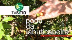 PODA DA JABUTICABEIRA http://w500.blogspot.com.br/