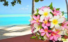A sweet plumeria wedding bouquet Hawaiin Flowers, Tropical Flowers, Frangipani Wedding, Wedding Flowers, Flower Centerpieces, Flower Arrangements, Exotic Beauties, My Flower, Flower Power
