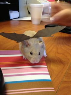 Image result for costumes for hamster