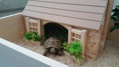 Country Cottage - Pet and Tortoise World Tortoise Cage, Tortoise House, Tortoise Habitat, Turtle Habitat, Baby Tortoise, Sulcata Tortoise, Tortoise Enclosure Indoor, Cat Enclosure, Turtle Enclosure