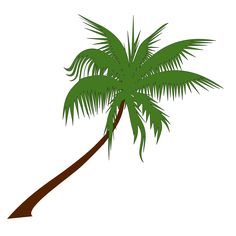 Palm tree - Free coconut,Palm,tree, Clip art by newt and more and are constantly expanding our content with exclusive files. Palm Tree Clip Art, Palm Tree Drawing, Palm Tree Vector, Tree Wall Art, Tree Illustration, Illustrations, Palm Tree Leaves, Palm Trees, Tree Trunk Wallpaper