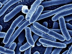 What Is E. Coli and What Are the Symptoms?