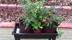 "The Gro-Matic Deck And Patio Planter! "" Plant It And Forget It"""