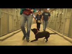 YouTube Dogs, Youtube, Animals, Animales, Animaux, Animal Memes, Animal, Pet Dogs, Dog