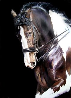 Samara Fly ~ Acrylics & Colored Pencils ~ Horse painting by Kim Irwin All The Pretty Horses, Beautiful Horses, Animals Beautiful, Cheval Pie, Horse Artwork, Painted Pony, Andalusian Horse, Horse Drawings, Appaloosa