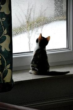 Oh my!!!!!!!!  Is this white stuff ever going away?  I want to go out and play !!!!!!!!