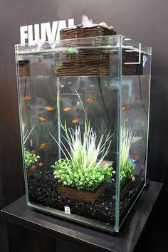 New Fluval Nano Aquariums   The Chi