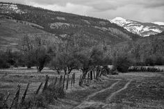 Double Track Through the Pasture, Kittitas County, Washington, 2011 | Click the picture above for information on purchasing a fine art photography wall print for your home. | #blackandwhite #rural