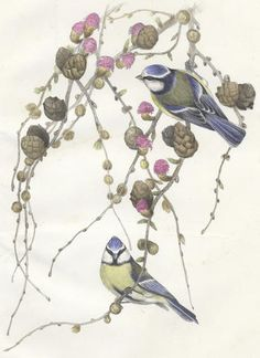 BLACKBURN (JEMIMA) Birds Drawn from Nature, first edition, Edinburgh, Edmonston & Douglas, 1862