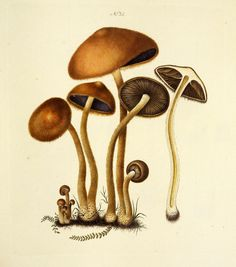 Lacrymaria pyrotricha. Image is under CC BY-NC-SA of Natural History Museum of Denmark (http://1url.cz/72Gy).