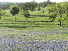 Texas hill country in spring. From texasufa.blogspot.com.