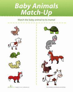 animal babies worksheet preschool | , Animals & the Earth Sorting & Categorizing Worksheets: Baby Animal ...