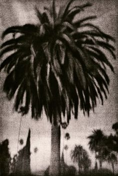 Palmtree: 16x20 Lith Silver Fiber, Selenium Toned Print by Guillaume Zuili