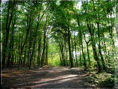 https://flic.kr/p/GaTnzb | sunny forest