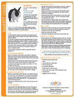 ASPCA Rabbit Care Tips