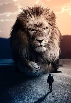 Pin by Steven Bugg on Lion Giant Animals, Animals And Pets, Cute Animals, Lion Wallpaper, Animal Wallpaper, Lion Love, Lion Painting, Lion Pictures, Prophetic Art