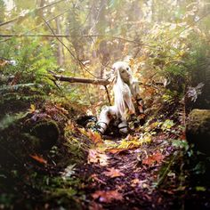 """.angelus errare."". (Kindra Nikole) http://avaxnews.me/appealing/Found_on_Flickr_Photo_Art_by_Kindra_Nikole.html"