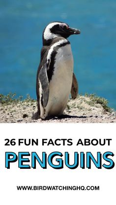 26 Penguin Facts That Will Make You Waddle With Joy! [2019