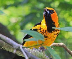 https://upload.wikimedia.org/wikipedia/commons/4/40/BIRDS_PARADISE_(7777931878).jpg